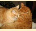 Kitties mailchimp
